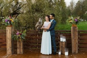 Сова на свадьбу